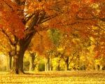 golden-autumn-tree-1280-1024-4547