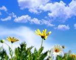 spring-daisy-1280-1024-4514